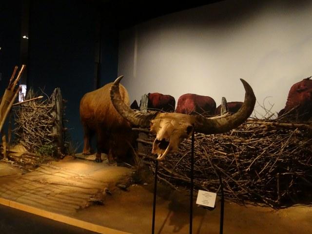 kanada tarih müzesi-33_640x480