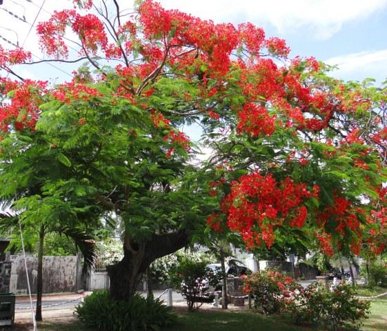 mauritius-50_561x480